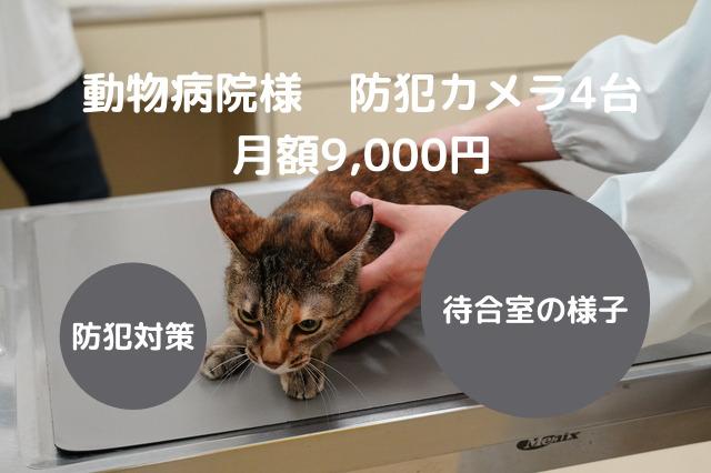 診療中の猫の写真