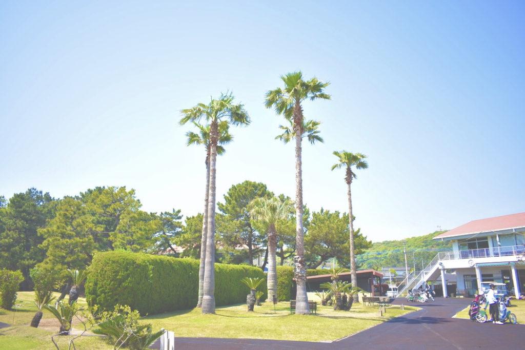 大岳ショートコースのヤシの木の写真